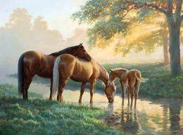 Картина по номерам Лошади на водопое E028