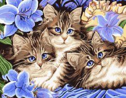 Картина по номерам Голубоглазые котята KTL057