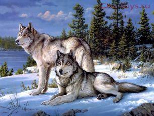 Картина по номерам Волки на снегу E200